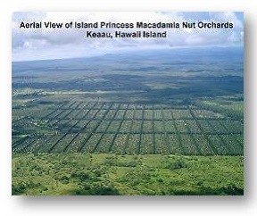 Mac Nut Orchards in Hilo